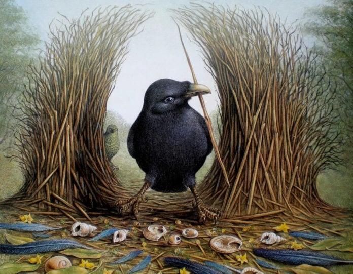 Птицы шалашники