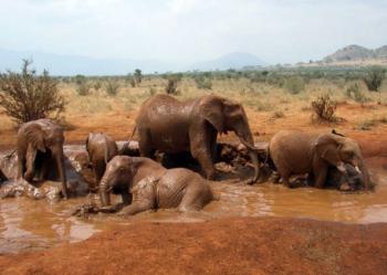 Грязевые ванны слонов