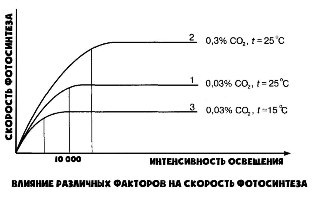 График скорости фотосинтеза