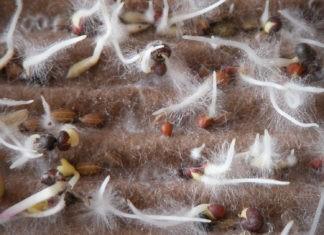 Учеными были установлены взаимовыгодные отношения между грибами и растениями