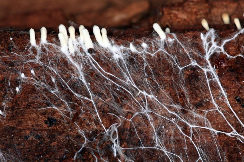 Роль грибов в почвообразовании