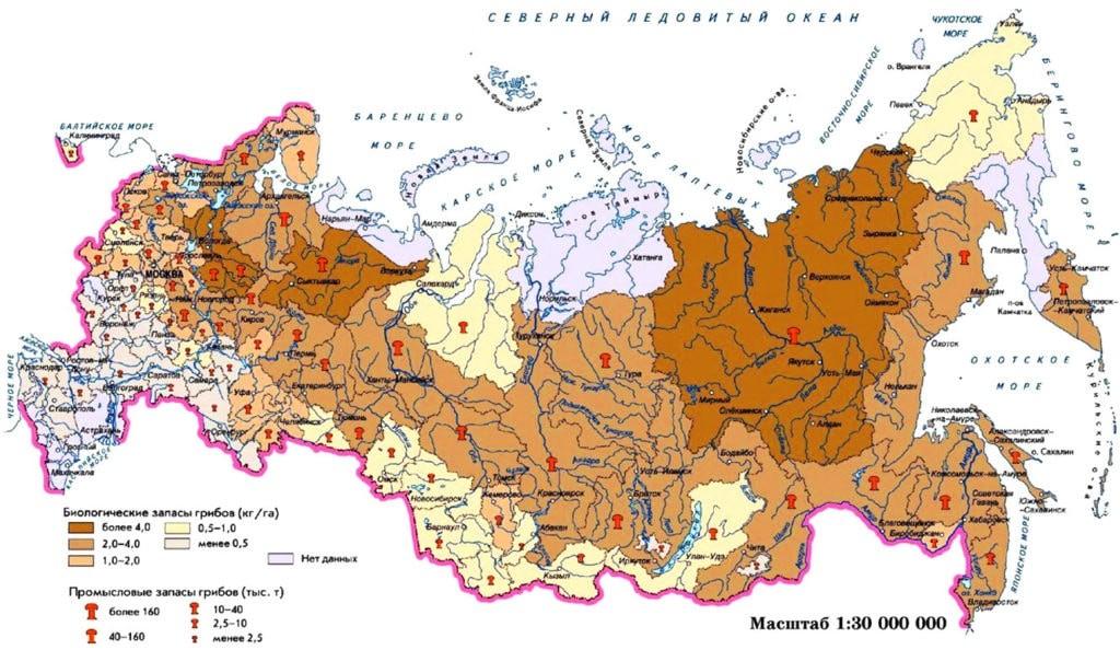 Карта грибных районов России