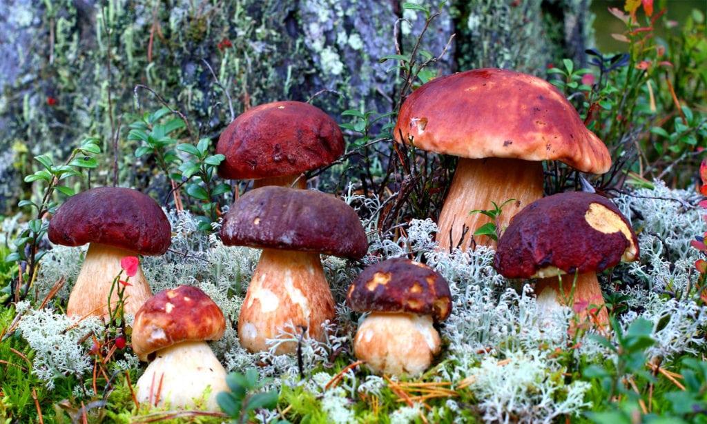 Грибы в лесу на мхах