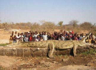 Самые большие виды крокодилов