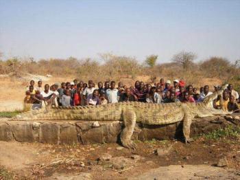Гребнистый крокодил - размеры