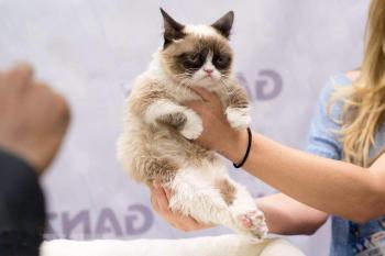 Угрюмый кот