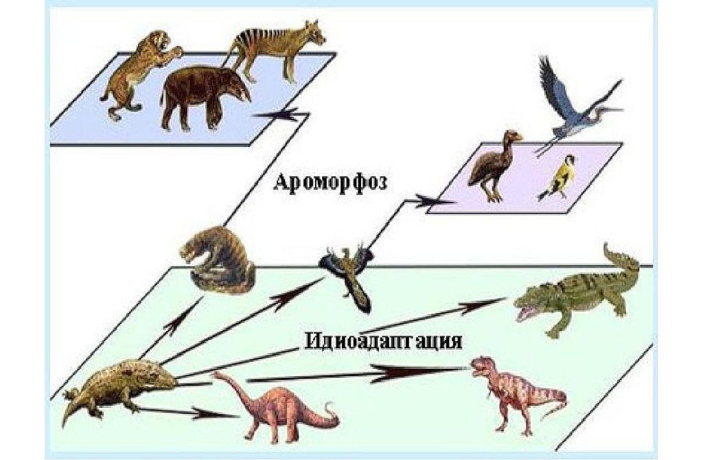 Идиоадаптация у животных