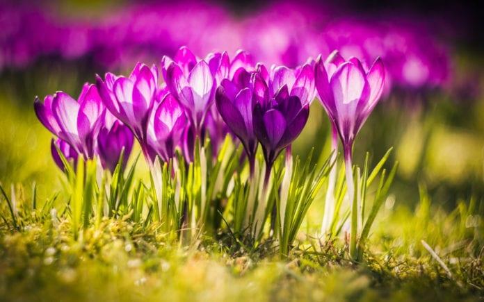 11 интересных фактов о цветах