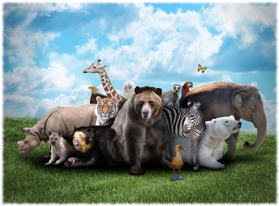 Почему животные объединяются в группы?