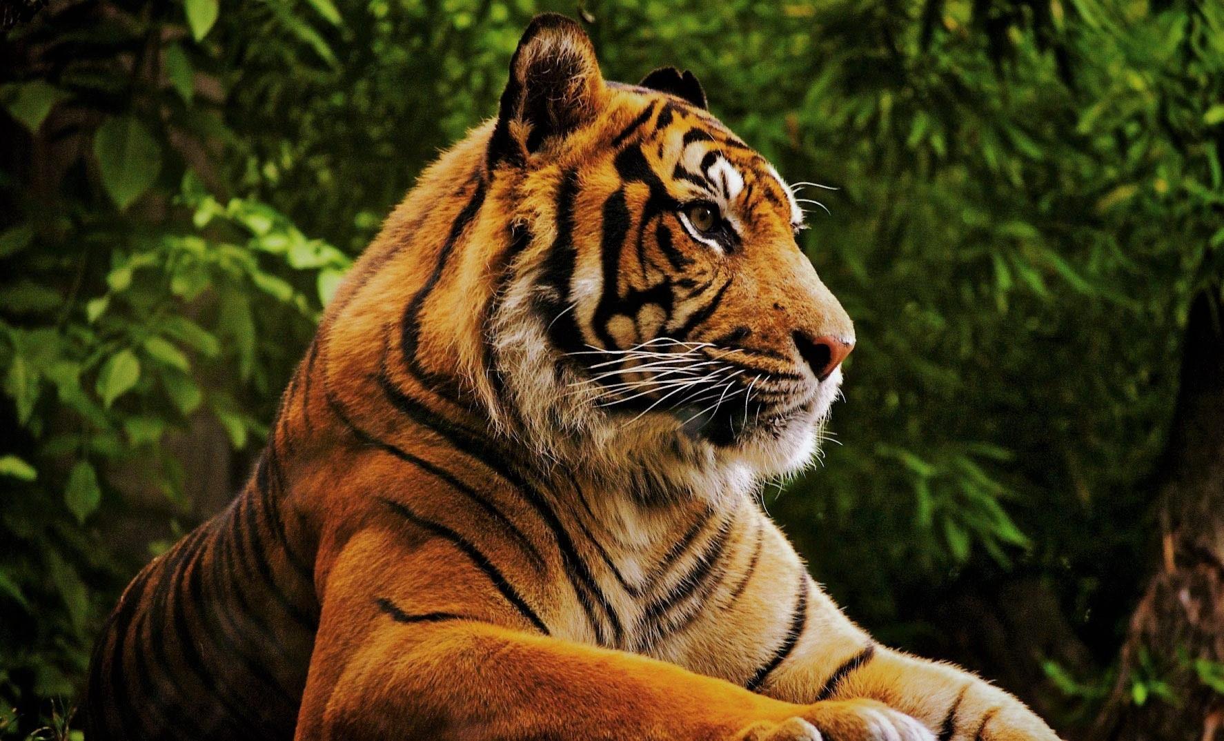 Животные - список, названия, описание, где обитают, фото и видео