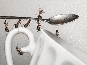 Как избавиться от муравьев?