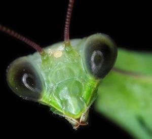 Как видят насекомые?