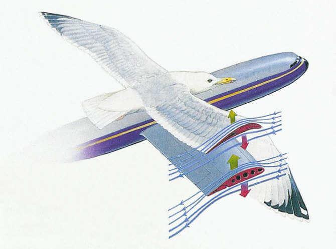 Как летают птицы