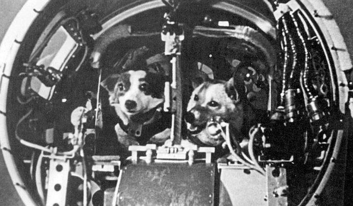 Как едят животные в космосе?