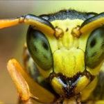 Когда атакуют пчёлы?