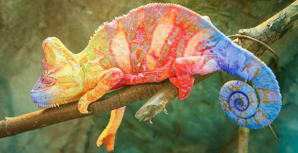 Хамелеон меняет цвет
