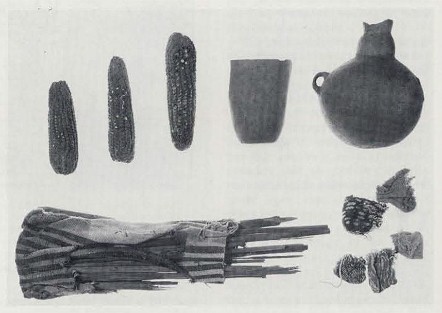 Во время археологических раскопок на территории Перу были обнаружены кукурузные початки