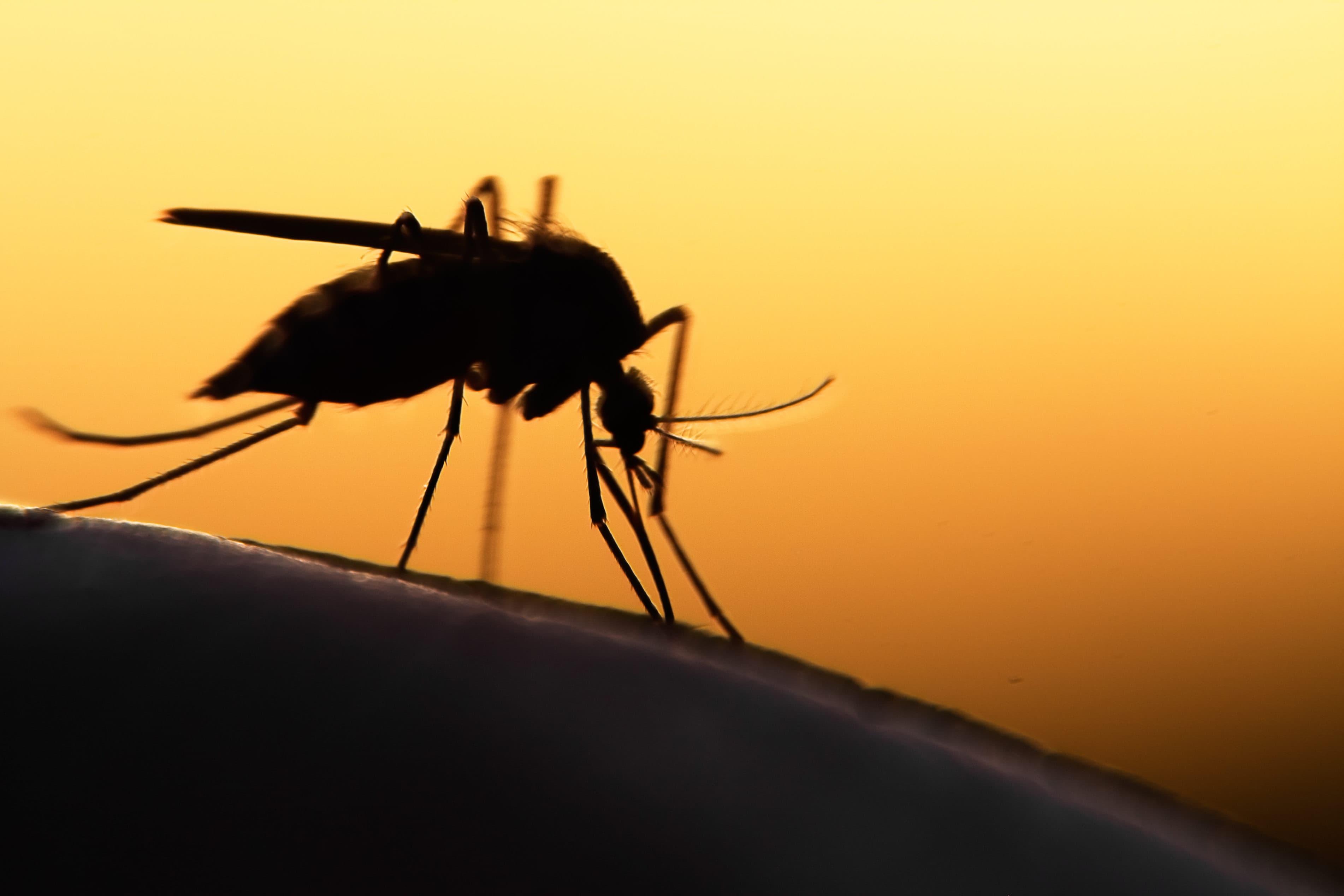 Какие люди больше всего привлекают комаров?