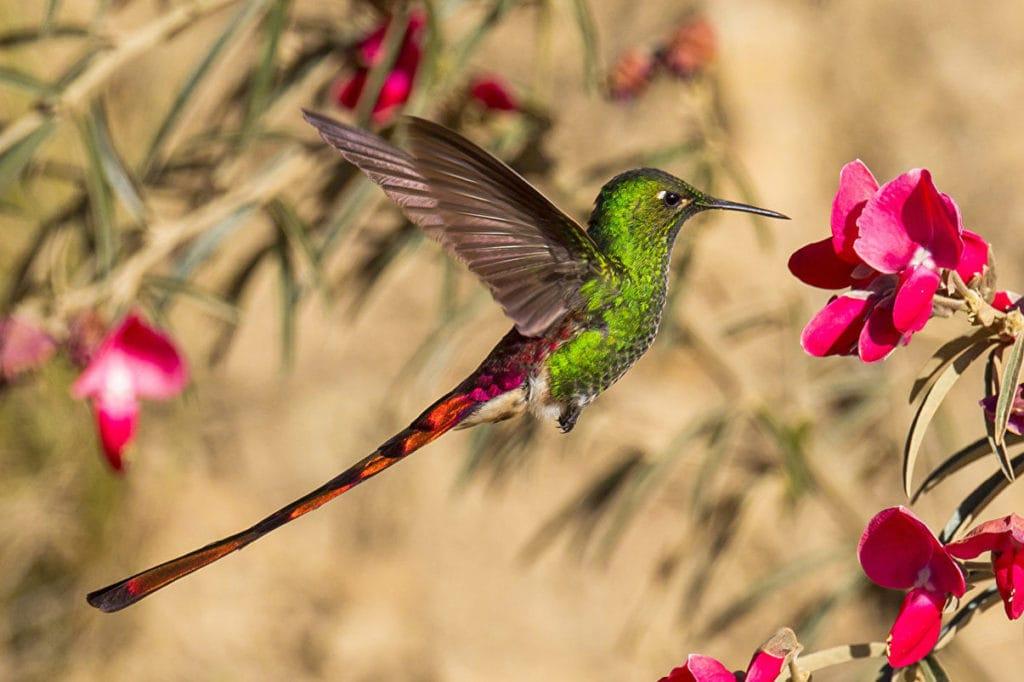 Питание колибри