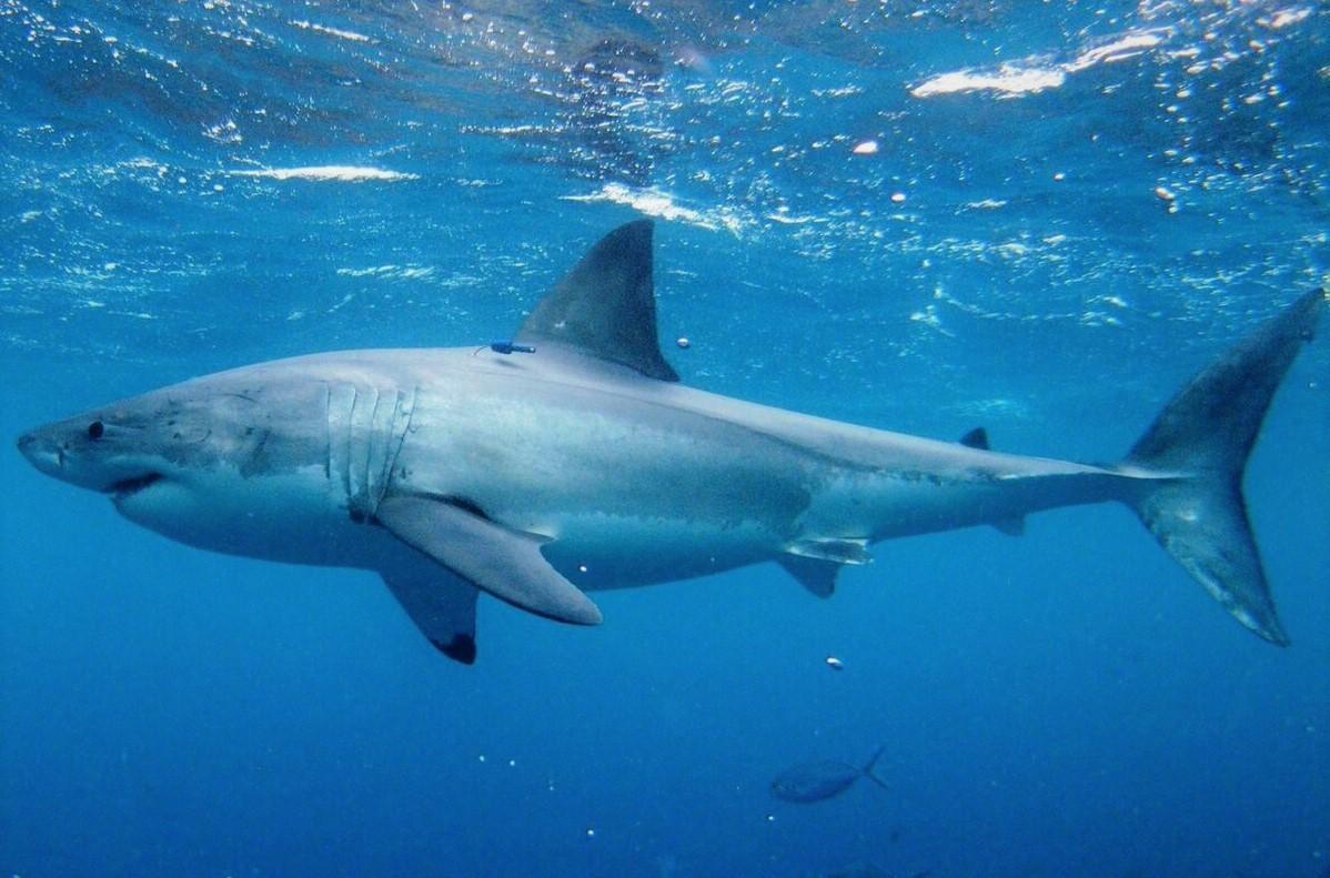 Могут ли акулы спать?