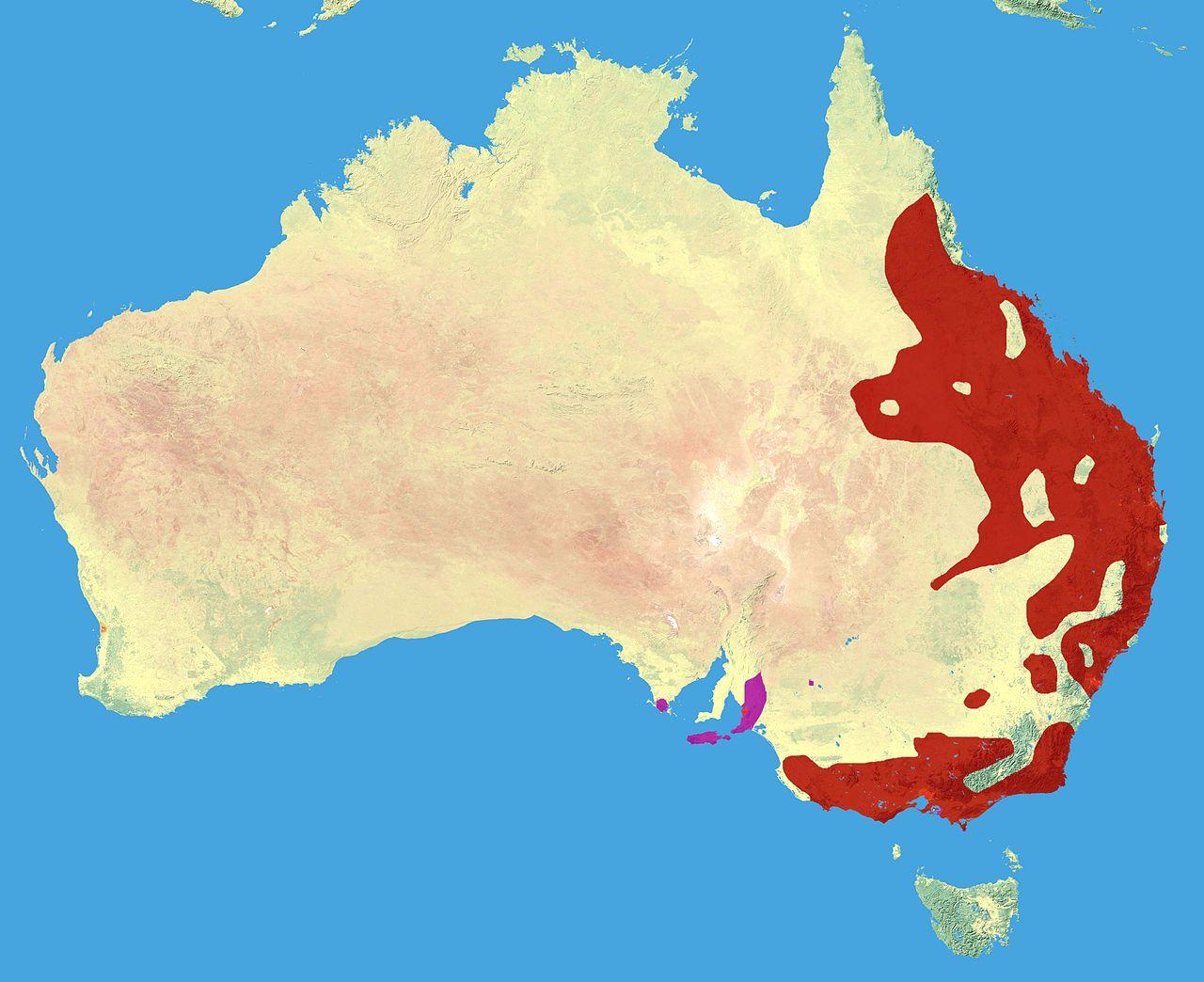 Ареал обитания коалы