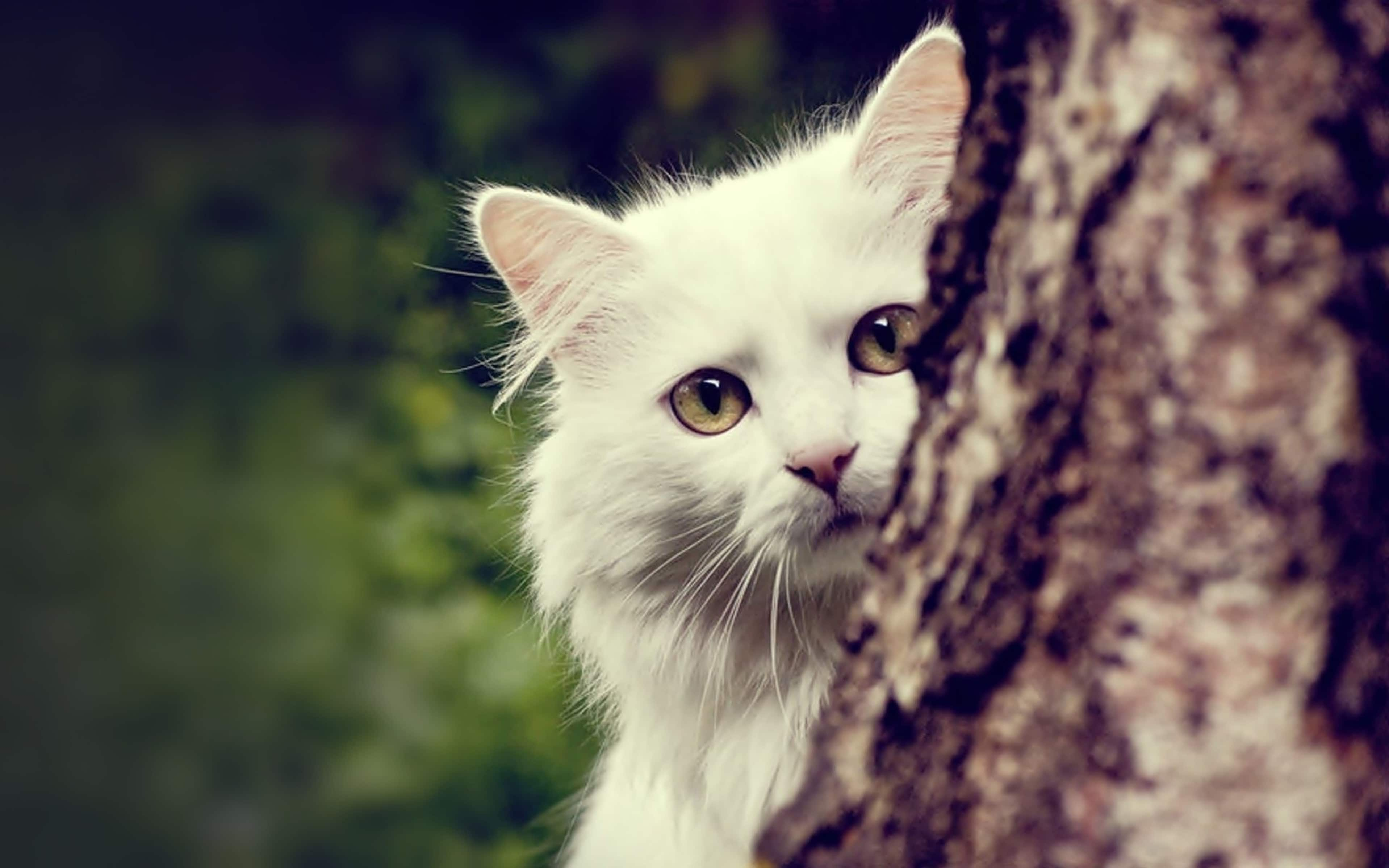 Почему кошки лазают по деревьям, а собаки нет?