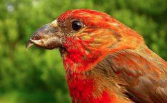 Зимующие птицы России – список, названия, описание, особенности, образ жизни, фото и видео