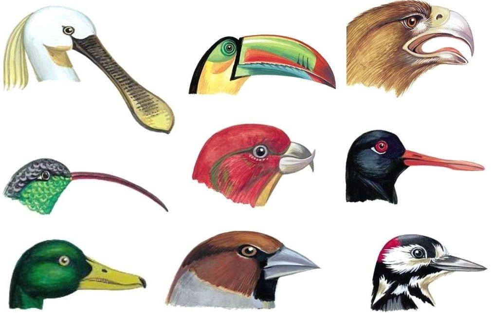 Примеры клюва разной формы
