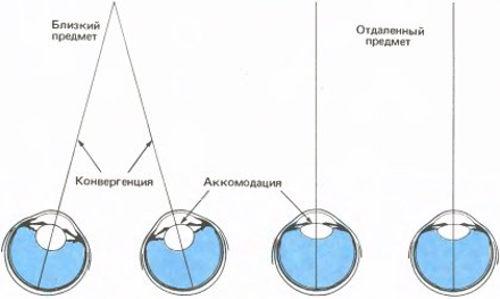 Теория о роли конвергенции глаз