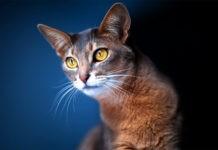 Как кошки предсказывают землетрясения?