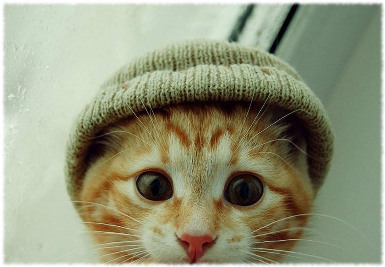 Какие породы кошек самые популярные в мире?