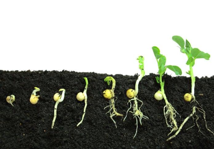 Как прорастают семена и все ли растения появляются из семян?
