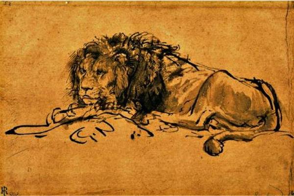 Капский лев - рисунок Рембрандта
