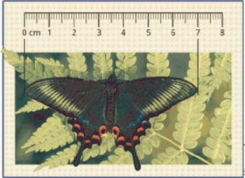 Размер бабочек