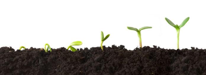 Как растут растения?