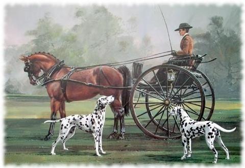 Далматины и лошади