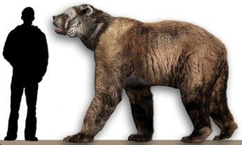 Сравнение короткомордого медведя и человека