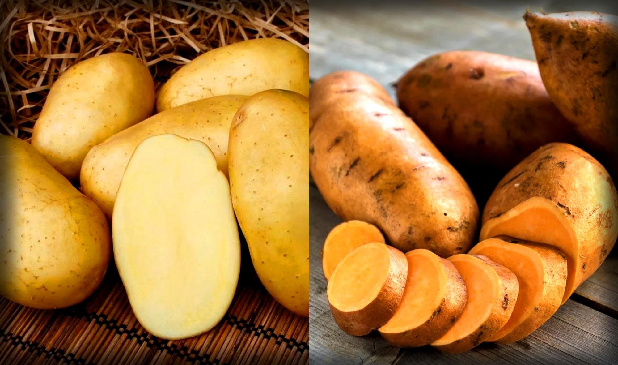 Чем отличается батат от картошки?