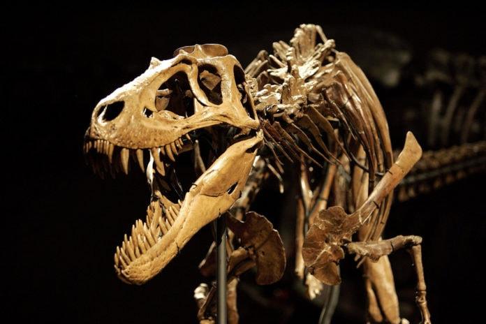 Как сохранились кости динозавров?