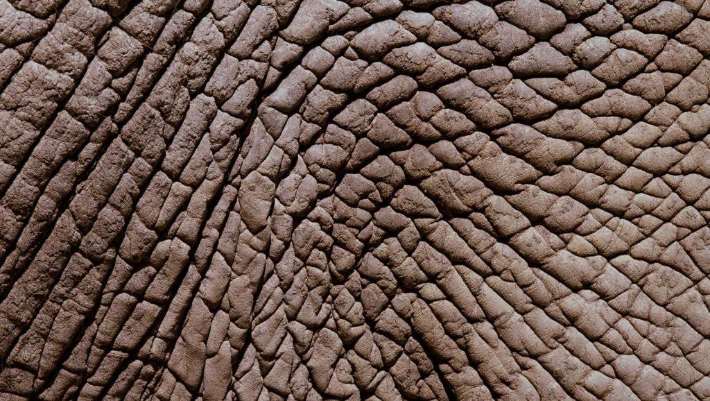 Кожа слона крупным планом