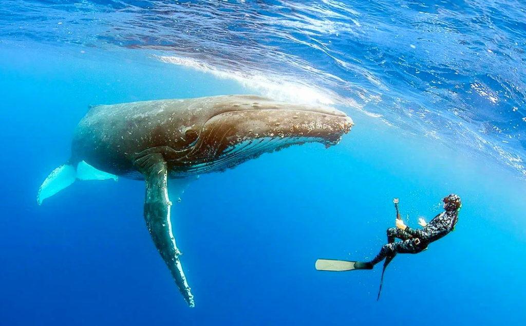 Большинство китообразных не боятся человека