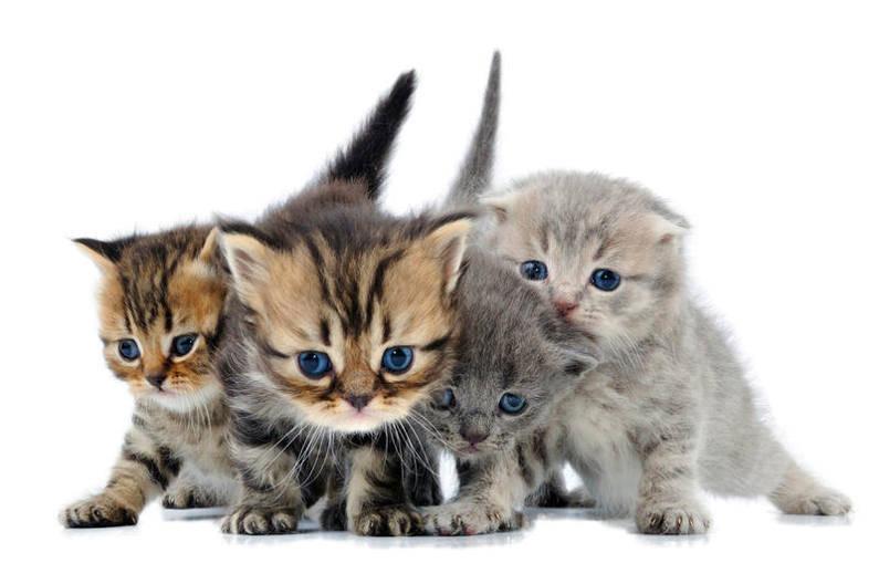 Как выбрать котенка?