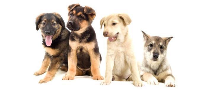 Как выбрать щенка?