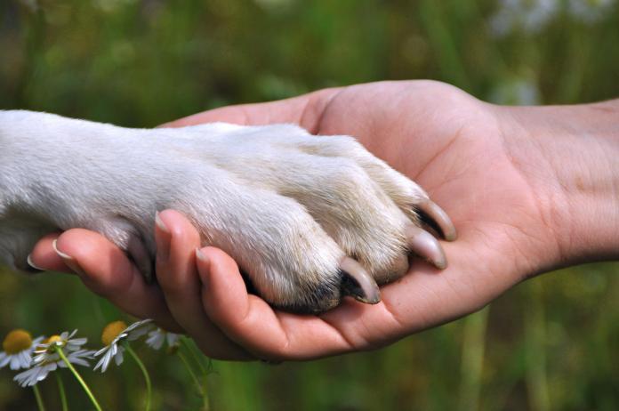 Рука человека и лапа животного