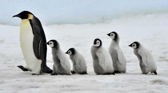 Самые лучшие отцы среди животных