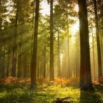 Съедобные и несъедобные растения в лесу