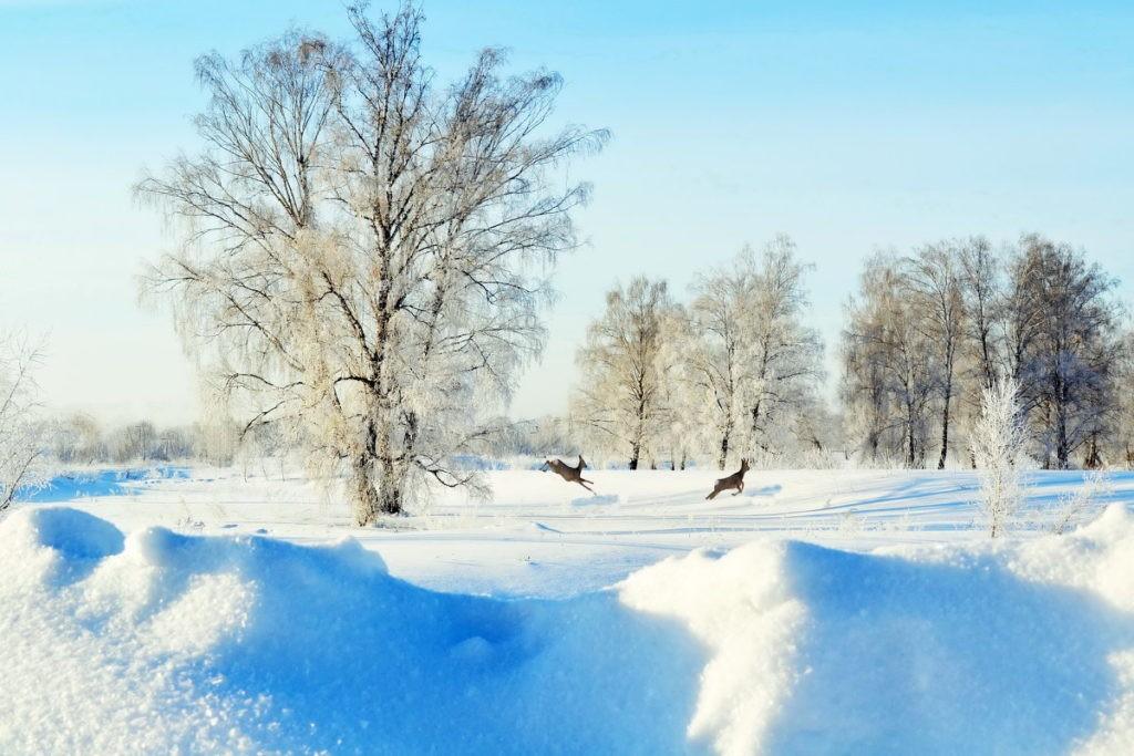Лесостепь зимой