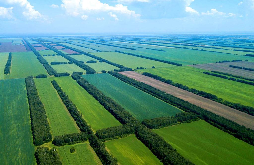 Лесозащитные полосы в степи