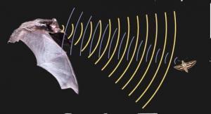 Летучие мыши эхолокация