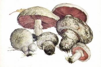 Самые коварные грибы - двойники